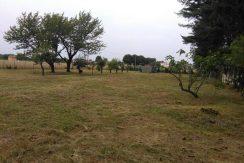 Magnago Bienate Terreno agricolo